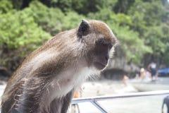 Affe, sitzend auf einem Boot Lizenzfreies Stockfoto