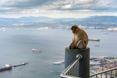 Affe sitzt auf Balkon und betrachtet Bucht von Gibraltar Lizenzfreies Stockbild