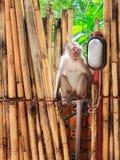Affe sitzt auf Bambuszaun Stockfoto