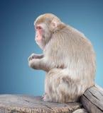Affe sitzt auf Baum Lizenzfreie Stockfotografie