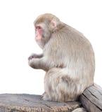 Affe sitzt auf Baum Lizenzfreie Stockbilder