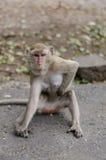 Affe sitzt auf dem Felsen Lizenzfreies Stockbild