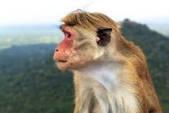 Affe sitzt auf dem Hintergrund der Berge nahaufnahme Lizenzfreies Stockfoto