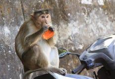 Affe sitzt auf dem Motorradsitz Lizenzfreies Stockbild
