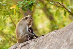 Affe sitzt auf dem Stein, der sein Baby hält Lizenzfreies Stockfoto
