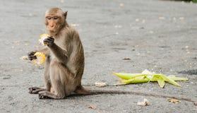 Affe sitzt auf dem Stein und isst Lizenzfreies Stockbild