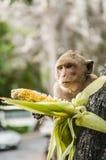 Affe sitzt auf dem Stein und isst Lizenzfreie Stockbilder