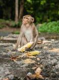 Affe sitzt auf dem Stein und isst Stockfoto