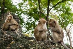 Affe sitzt auf dem Stein und isst Lizenzfreie Stockfotos