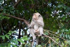 Affe sitzt auf einem Baum Stockbild