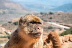 Affe sitzt auf einem Boden Lizenzfreies Stockfoto