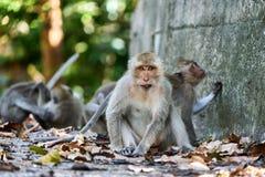 Affe sitzt auf einem Boden, betrachtet Sie Stockbilder