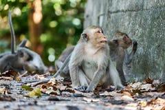 Affe sitzt auf einem Boden, betrachtet Sie Lizenzfreies Stockfoto