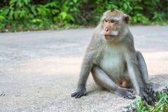 Affe sitzt auf einer concreted Straße nave Lizenzfreies Stockfoto