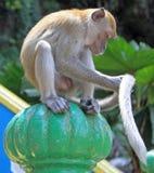 Affe sitzt auf grünem Bereich, Batu-Höhlen Lizenzfreie Stockfotos