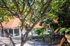 Affe sitzt auf Niederlassung im Baum Stockfotografie