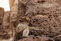 Affe sitzt auf Stein Lizenzfreie Stockfotos