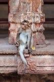 Affe sitzt auf Steinplatten in einer unterhaltenden Haltung Lizenzfreie Stockfotografie