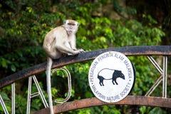 Affe sitzt auf Zeichen zur Tempelhöhle in Batu-Höhlen Stockfoto