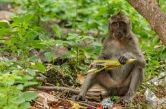 Affe sitzt mit einem Blatt Lizenzfreie Stockfotografie