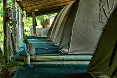 Affe sitzt nahe bei kampierendem Zelt Stockbild
