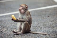 Affe sitzt und isst Banane Lizenzfreie Stockbilder