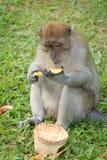 Affe sitzt und isst Banane Stockfotografie