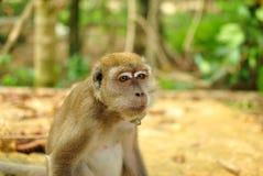 Affe sitzt und schaut Lizenzfreies Stockfoto