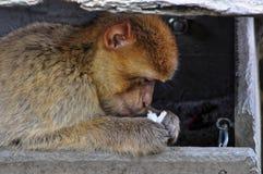 Affe sitzt unter hölzernem Dach Lizenzfreies Stockfoto