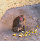 Affe sitzt Zoo Stockfotos