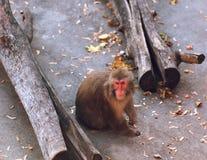 Affe sitzt Zoo Stockbilder