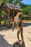 Affe steht auf einem Stein Lizenzfreies Stockfoto