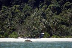 Affe-Strand, Nationalpark Penangs, Malaysia Lizenzfreie Stockbilder