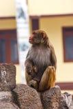 Affe am Swayambunath-Tempel, Kathmandu, Nepal Lizenzfreies Stockbild
