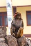 Affe am Swayambunath-Tempel, Kathmandu, Nepal Stockfoto
