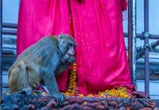 Affe am Tempel Lizenzfreies Stockfoto