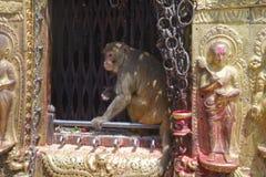 Affe-Tempel B Stockfoto