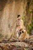 Affe in Tempel Khao Takiab Stockfotografie