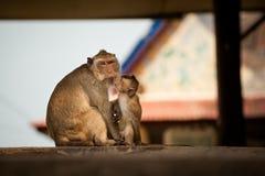 Affe in Tempel Khao Takiab Stockbilder