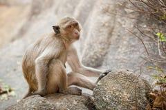 Affe in Tempel Khao Takiab Lizenzfreie Stockfotografie