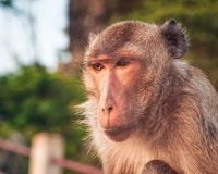 Affe, Thailand Lizenzfreie Stockbilder