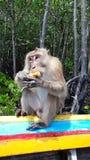 Affe in Thailand Ananas essend Lizenzfreies Stockfoto
