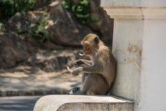 Affe in Thailand, Thailand Stockfotografie