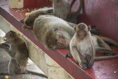 Affe in Thailand, Thailand Lizenzfreie Stockbilder
