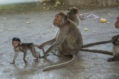 Affe in Thailand, Thailand Lizenzfreies Stockbild
