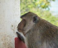 Affe in Thailand, Thailand Lizenzfreie Stockfotos