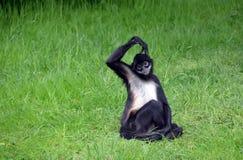 Affe thinkink Foto Lizenzfreies Stockfoto