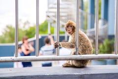 Affe, Touristen beobachtend Lizenzfreie Stockfotografie