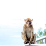 Affe, Touristen beobachtend Stockbild