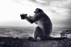 Affe-Trinken Stockfotos